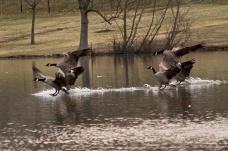 http://shoulpix.wordpress.com/2013/03/16/morning-landing/
